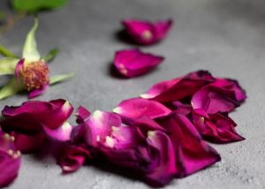 funeral homes in Fort Myers, FL